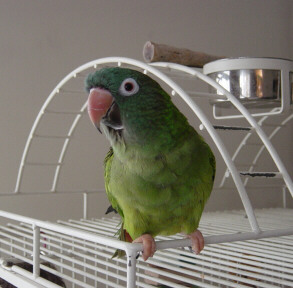 warm happy conure